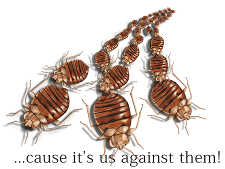 Bedbug Control - Cause it's us against them!